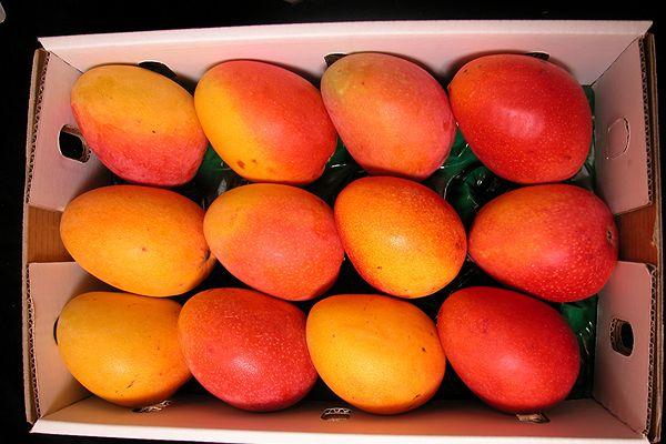 Fruit picking : récolte et cueillette de fruits en Australie