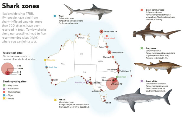 shark attack zones australia