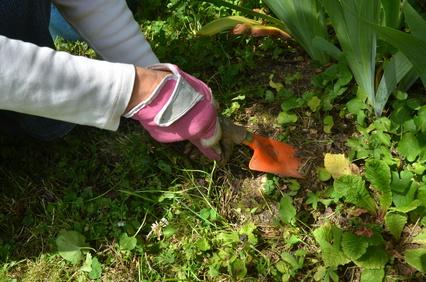 Helpx en Australie : travaux de jardinage